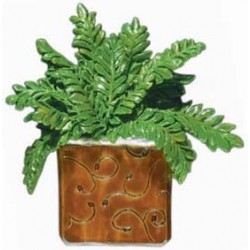 Boston Fern, amber pot