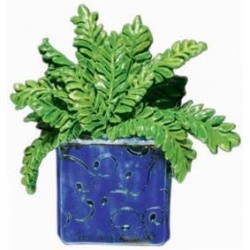 Boston Fern, bluepot