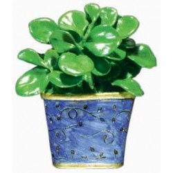 Rubber Plant, blue pot