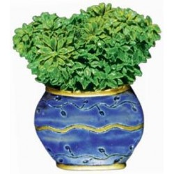 Green Plant, blue pot